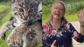 Bobcat kittens adopted by Carole Baskin, Big Cat Rescue after mom passes