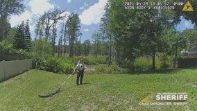 'I owe you a new broom': Hillsborough County deputy gives gator 'joyride' back to pond on broomstick