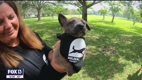 Breeder of law enforcement dogs giving pup to military veteran