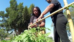 Downtown St. Pete farm feeds community, fertilizes young minds