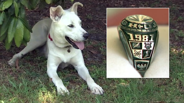 Decades-old class ring headed back to owner after dog digs up long-lost treasure