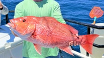 Red snapper bite is on fire offshore