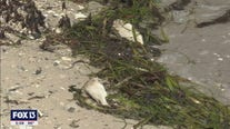 Expert: Variety of sources could be enhancing red tide bloom