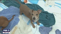 Fluff Animal Rescue gives animals another chance to find a furever home