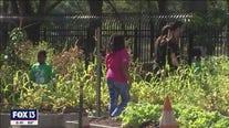 Interactive garden teaches kids to grow, cook healthy food