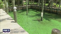 Expert panel chosen by governor to address Florida's water crisis