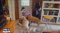 Pet sitters care for wide-variety of animals
