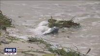 Fish kill cleanups continue along Bay Area beaches