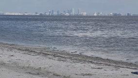 It's license-free saltwater fishing weekend in Florida