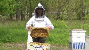 Clearwater garden has beekeepers buzzing about free place to keep hives, harvest honey