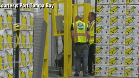 Bay Area residents may pay less for bananas as Port Tampa Bay lands million-dollar deal with Dole