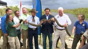 Gov. DeSantis announces Burmese Python hunting contest to help eradicate invasive species