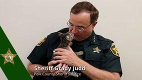 Polk County Sheriff Grady Judd really wants you to adopt a kitten