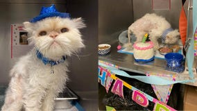 Ohio animal shelter throws purr-fect birthday party for 19-year-old cat