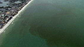 What is Florida's red tide, and where does it come from?