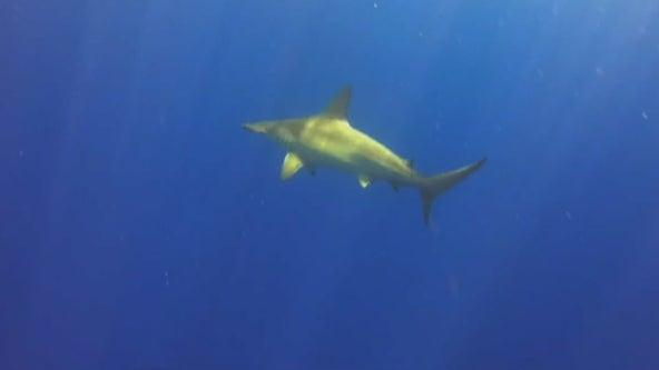 Shark populations crashed 19 million years ago