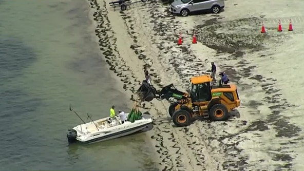 Red tide lingers off Pinellas coast, shows up in new spots in Tampa Bay