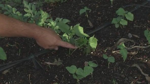 Heat-tolerant plants for the Florida summer