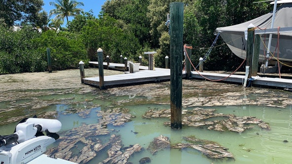 Fried looks to update Florida's water rules