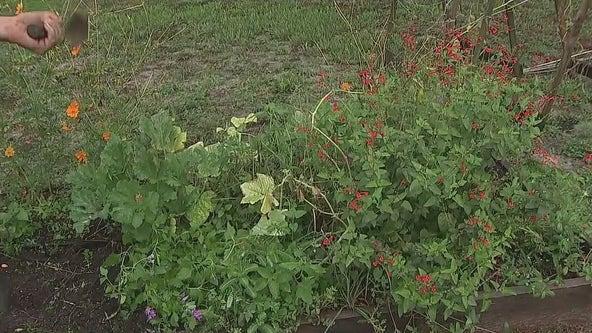 How to prepare your garden for next season