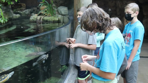 Campers get up close and personal with marine life at Florida Aquarium this summer