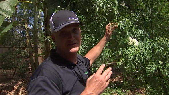 Pasco County man uses social media to teach world about edible landscaping