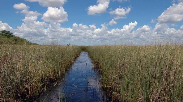 DeSantis, Florida Cabinet give green light to highway across Everglades wetlands