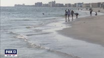 Red tide on Pinellas Beaches