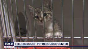 Find a furever friend for free at Hillsborough Pet Resource Center