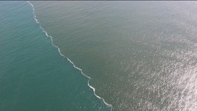 FWC, DEP set up office in St. Petersburg to monitor red tide