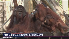 ZooTampa is finding new ways to keep you cool this summer