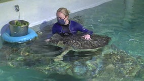 Clearwater Marine Aquarium gives injured, sick marine animals a new lease on life