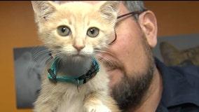 Kitten season: Avoid 'kit-napping,' don't assume a litter of kittens is abandoned