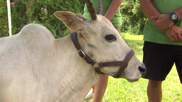 Experience friendly animals from all over the world at local farm and apiary