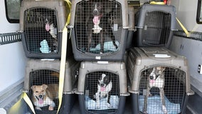 Hurricane Ida dogs arrive in Bay Area, ready for adoption
