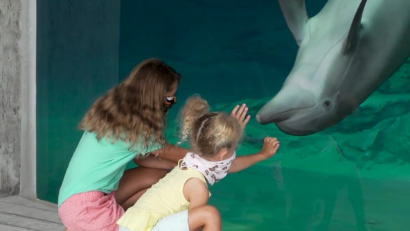 Summer camp at Clearwater Marine Aquarium is hands-on learning experience