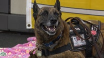 As veteran or volunteer, K9 Partners for Patriots give service dogs and their partners purpose