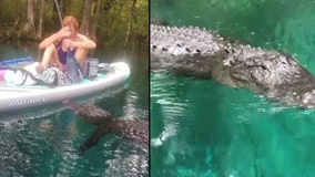 Alligator swims up to woman, tries to bite paddleboard at Central Florida park