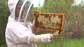 Couple turns passion for pollinators into thriving honey business