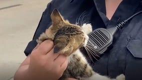 VIDEO: Fort Worth police rescue kitten alongside Texas interstate