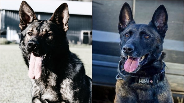 Troopers mourning loss of 2 FHP K-9s