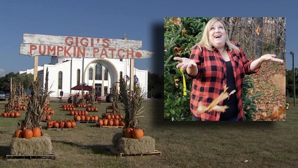 Pumpkin patch honors Pasco County teacher who died from COVID-19