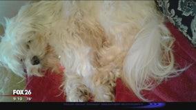 Dog stolen from Kingwood front yard
