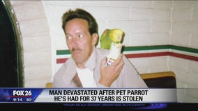 Man devastated after pet parrot he's had for 37 years stolen