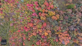 Stunning fall foliage in northern Utah captured in drone footage