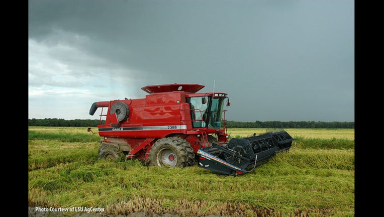Harvest in the rain - Photo by LSU Agcenter USA Rice
