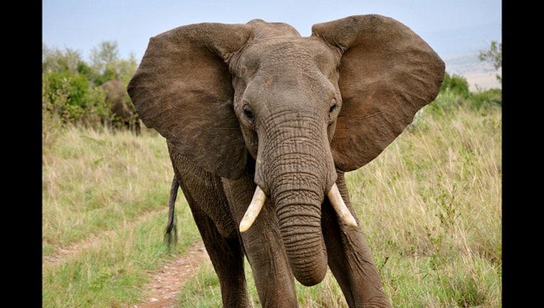 4a79996b-elephant-404023.jpg