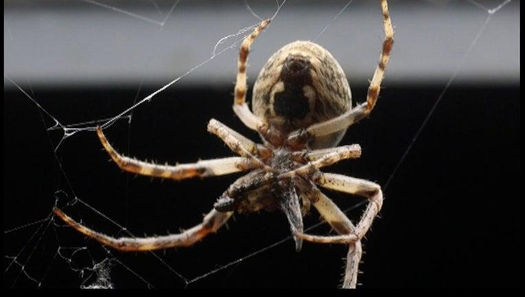 26a31346-Bridge-Spider Infestation_1445746316392