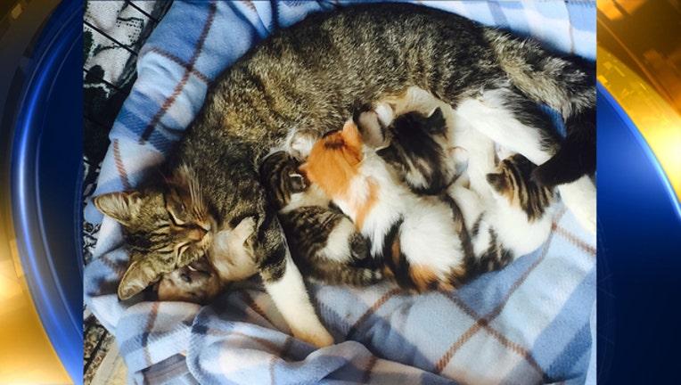 086259fb-CAT_NURSES_PUPPY-65880.jpg