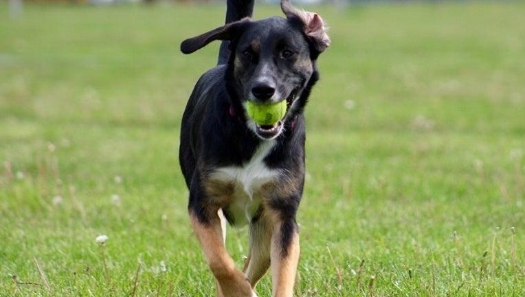 8aaa34b1-Dog Running_1490719145329-401096.jpg